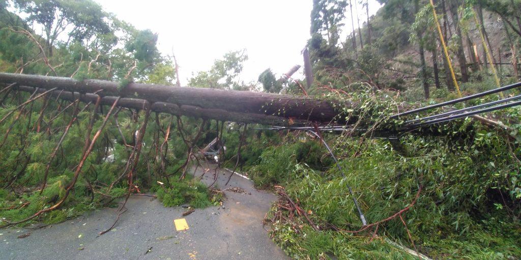 Typhoon #15