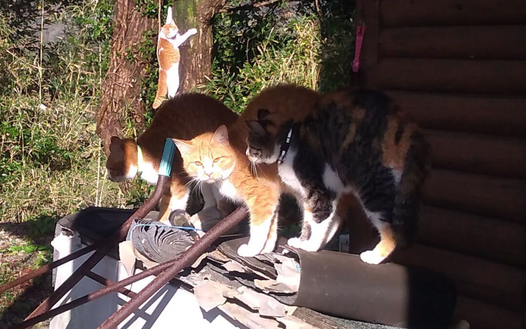 Cat pose IRL