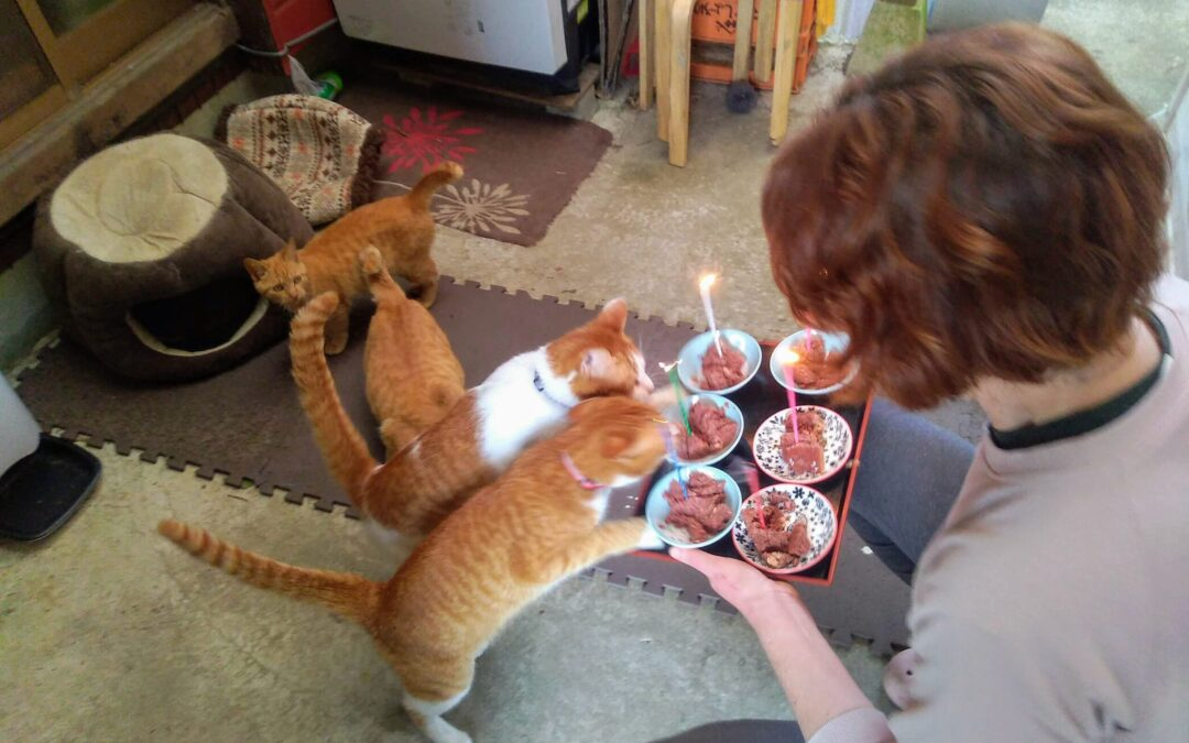 Happy 1st birthday to the weather four-cats!