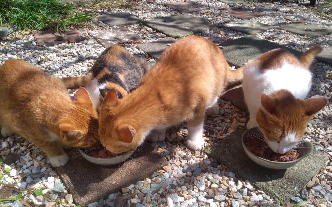 Happy half-birthday, kittens!