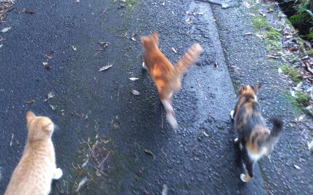 The Hachiko cats of Hiratsuka